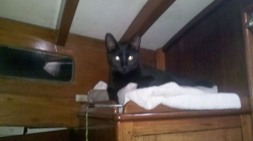 Sparta on her favorite perch on John's hanging locker where she is mistress of all she surveys.
