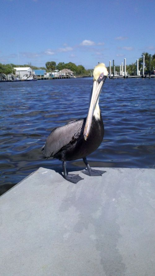This guy jumped on oour boat for a free ride back to the dock.