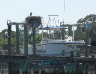 Osprey and his fishing boat