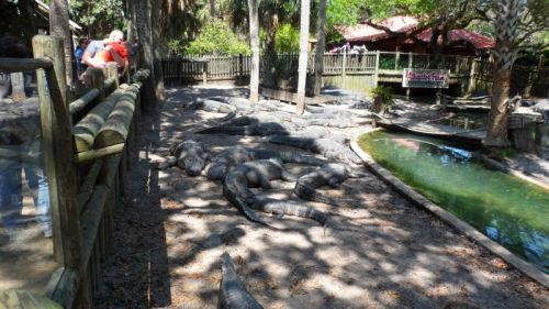 Gator Farm.  I hate them.