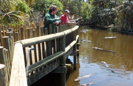 John feeding the gators.  Gator food and dog food look very similar.