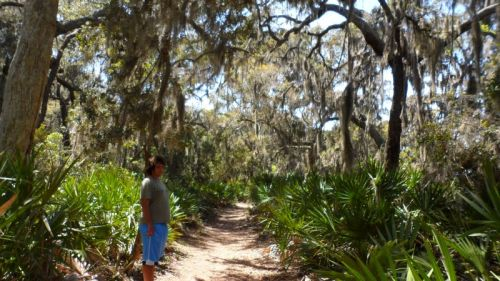 34Miles of beautiful trails cross Cumberland Island.